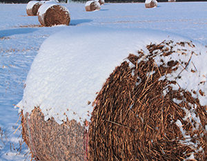 hay with snow on top